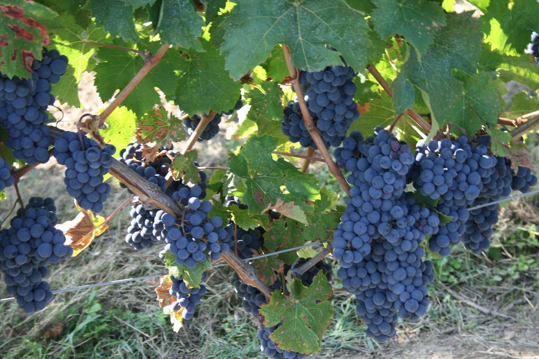 duval-voisin-vin-rouge
